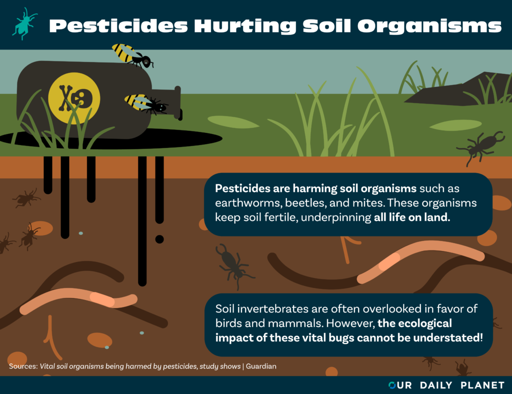 Forgotten Soil Ecosystems Are Being Destroyed by Pesticides