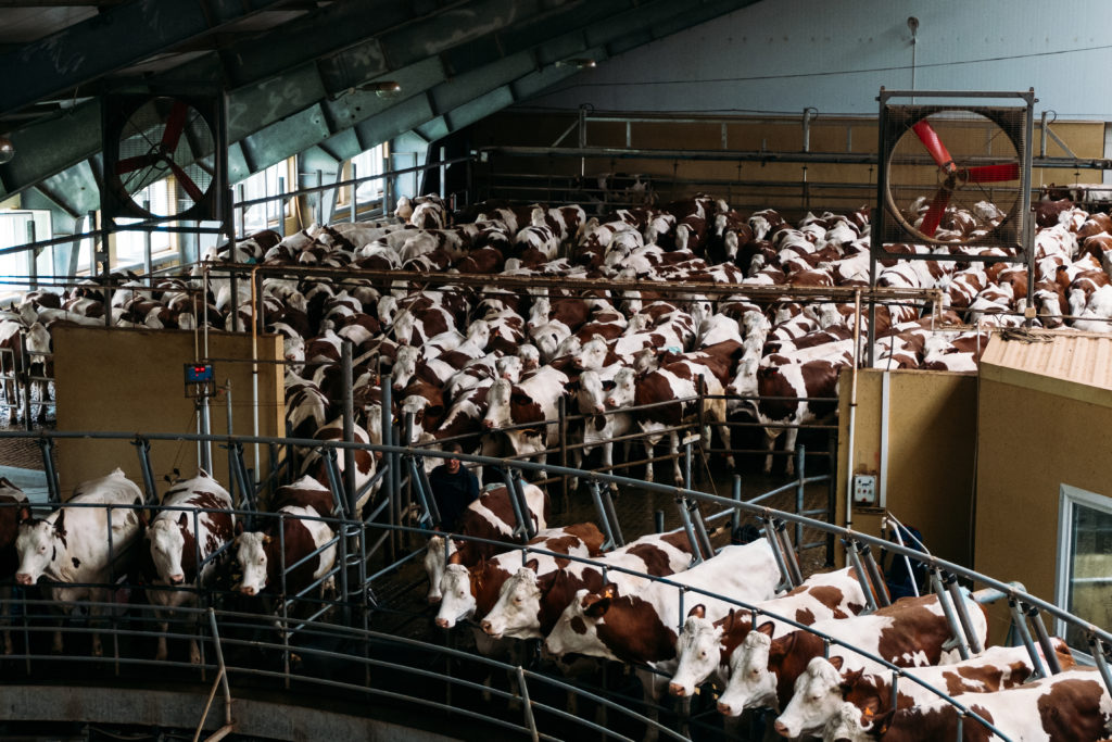 Animal Farms,  A Serious Source of Air Pollution